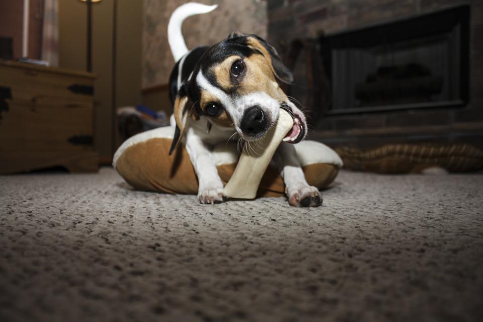 Loomanahast valmistatud närimiskonte töödeldakse kemikaalidega, mis on koertele mürgised!